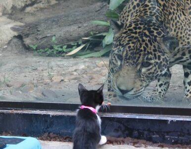 Zwierzęta ze schroniska zabrano na wycieczkę do zoo. Mogły spotkać...