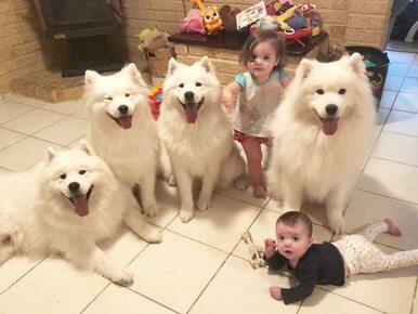 Od nich nie można oderwać wzroku. Dwoje dzieci i cztery psy podbijają...