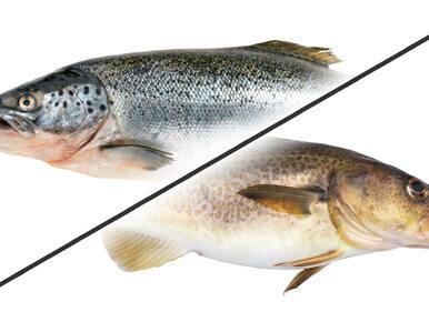 Dorsz czy łosoś? Która ryba ma mniej kalorii?