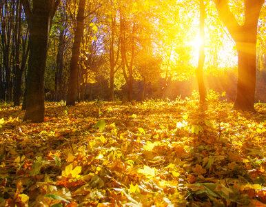 Ciąg dalszy ciepłej jesieni. Środa słoneczna w całym kraju
