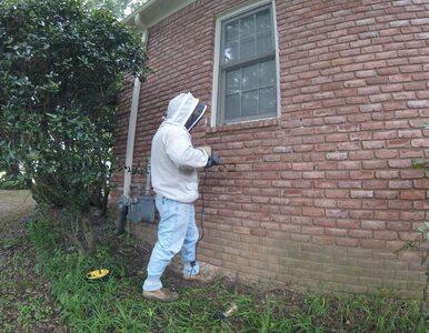 Pokazał, co odkrył po usunięciu kilku cegieł z domu klienta. Post stał...