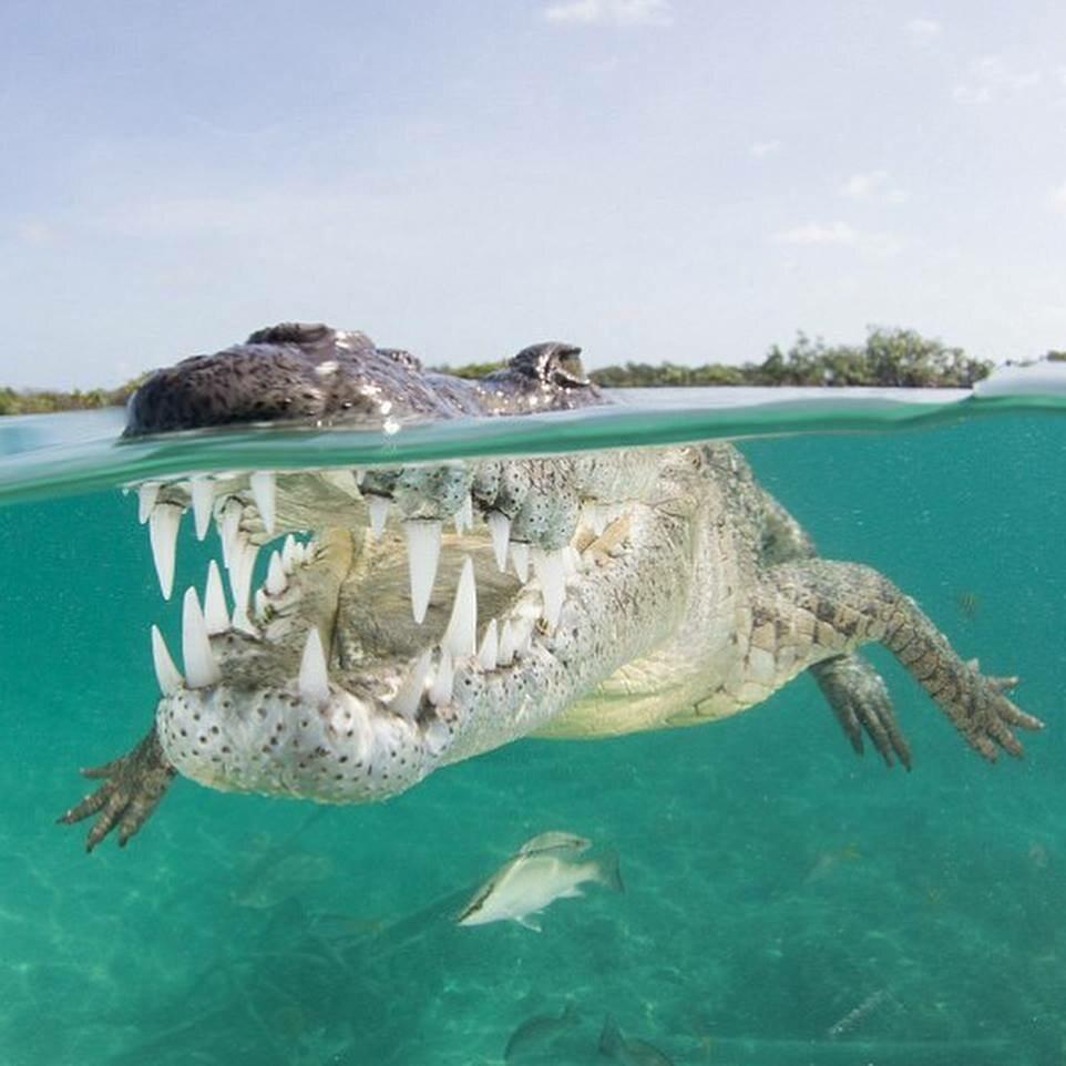 Bliskie spotkanie z krokodylem