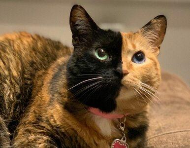 "Venus – kotka o ""dwóch twarzach"". To chimera"