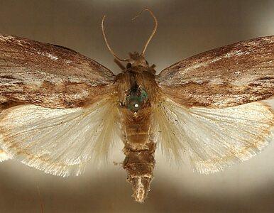 Najdoskonalszy słuch na świecie ma… owad