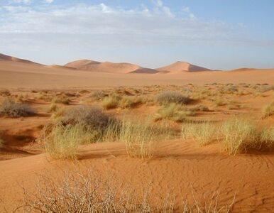 """Maratończyk z Finlandii przebiegł Saharę. """"Mogłem biec dalej"""""""