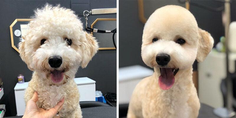 Przed i po wizycie u pseigo fryzjera