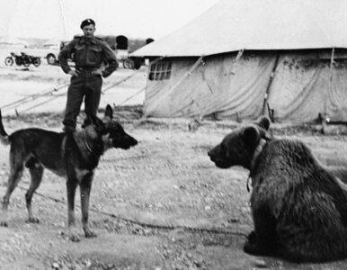 Walczył pod Monte Cassino, będzie miał pomnik. Był niedźwiedziem