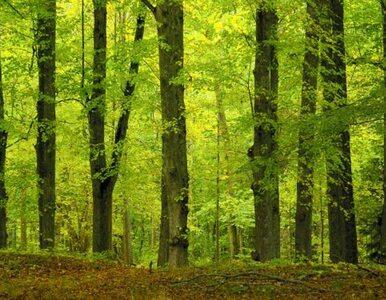 """""""8-latek wyszedł sam z lasu, ale zawrócił"""""""