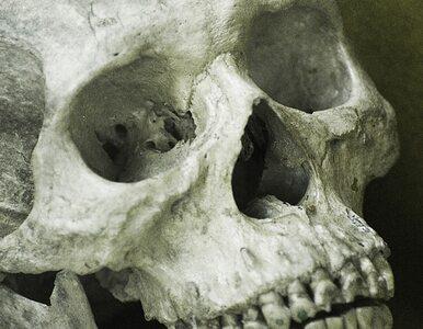 Częstochowa: wycinali drzewa, znaleźli... ubrany szkielet