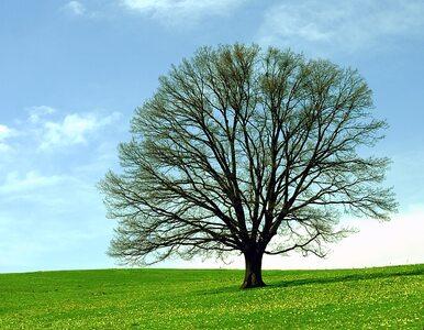 Fotograf związał się z… drzewem