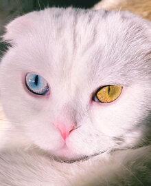 Joseph – kot, któremu wróżymy ogromną karierę. Wszystko przez te...