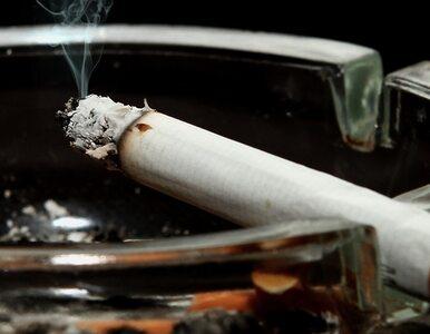 Rolnicy żądają dopłat do produkcji tytoniu