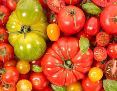 Sezon na pomidory. Dlaczego warto jeść je jak najczęściej?