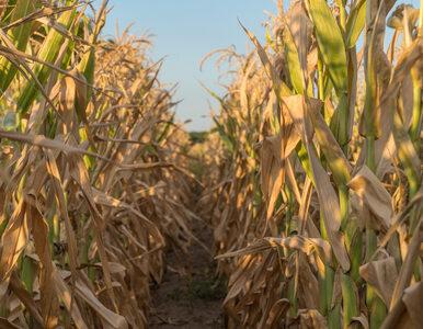 Dodatkowe 400 mln zł dla rolników? Rząd pracuje nad zwiększeniem puli na...