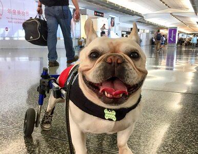 """22 psy i 1 świnka pracują na lotnisku. Tworzą specjalistyczną """"brygadę"""""""