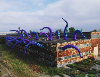 Potwór morski nową atrakcją portu. Przyciągnie turystów?