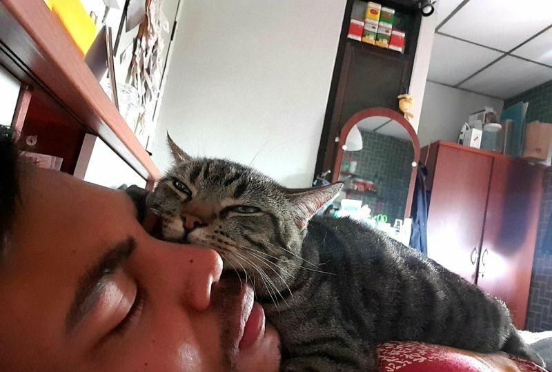 Lomphonten Lomphontan i jego kot