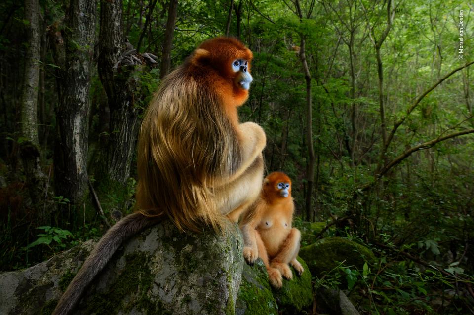Nagrodzone orazwyróżnione zdjęcia wkonkursie Wildlife Photographer ofthe Year