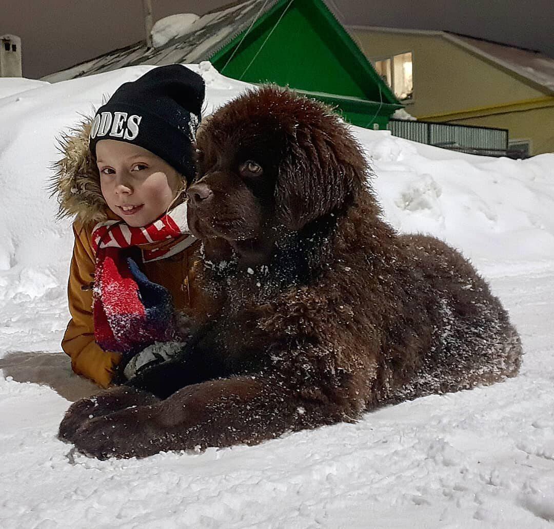 Pies rasy nowofunland