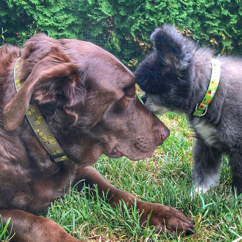Abi i Dabi - psy, które połączyła przyjaźń