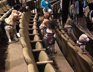 Psia publiczność na przedstawieniu w teatrze. Zdjęcia stały się hitem sieci