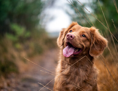 Podatek od posiadania psa. Kto jest zwolniony z opłaty?