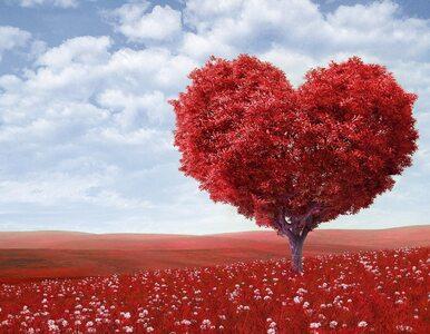 Jak dobrze znasz się na miłości? Przekonaj się, rozwiązując nasz quiz