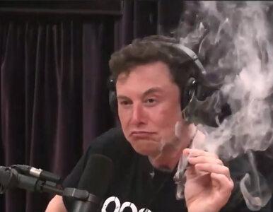 Elon Musk nagrał swój pierwszy rap singiel. Oddaje w nim hołd gorylowi...
